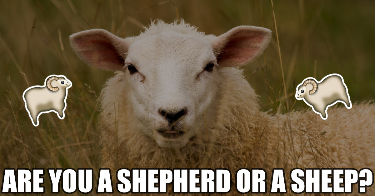 Are you a Shepherd or a Sheep?